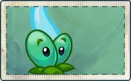 Magic Vine Seed Packet