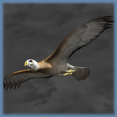 Archivo:Epsilon program eagleout.png