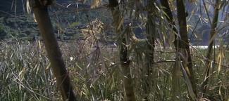 80th Vice. Desaparecida en Vietnam. 2ª parte Hierba II