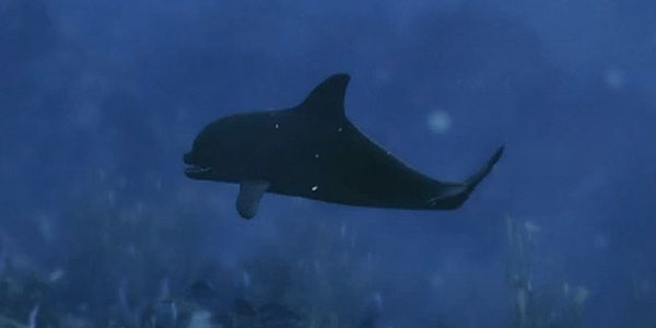 Archivo:Dolphin.jpg