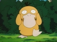 Archivo:EP049 Psyduck (3).png
