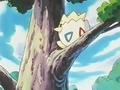 EP182 Togepi en el árbol.png