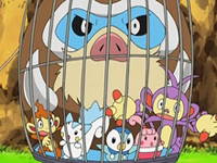 Archivo:EP575 Mamoswine de Maya atrapado junto a otros Pokémon.png