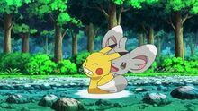 EP673 Minccino usando cosquillas en Pikachu