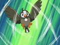 EP471 Starly de Ash.png