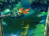 Archivo:EP520 Chimchar huyendo de los Zangoose (2).png