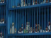 EP482 Jaulas con Pokémon