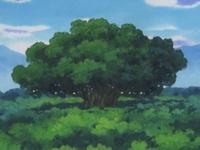 Archivo:EP313 Gran árbol (2).jpg