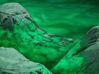 EP558 Algas en las rocas