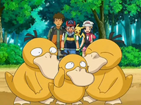 Archivo:EP556 Familia Psyduck.png