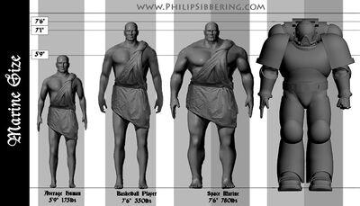 Anatomía marine espacial 40k comparación humano normal.jpg