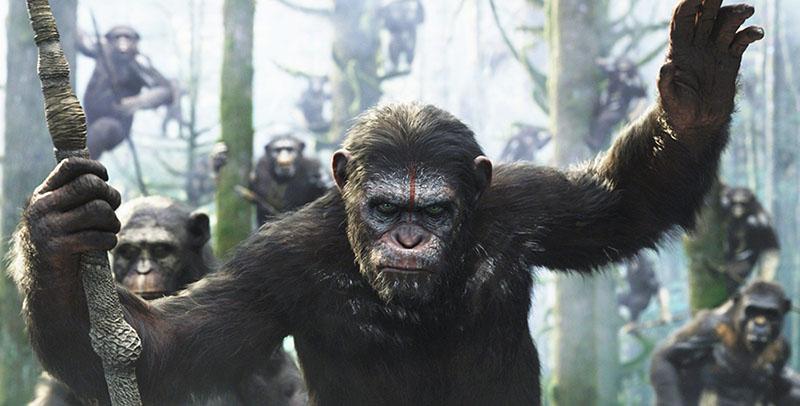 Fondo simios