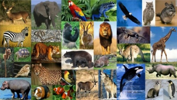 Archivo:Animales.png
