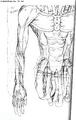 Simulation Bodies artwork 2.png