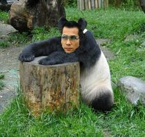 Panda Ken