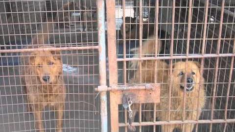 樂心動物庇護所 - 捐款呼籲