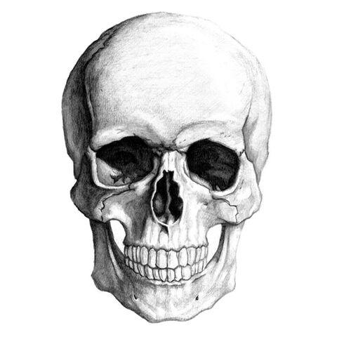 File:Skull illustration by yungtyrant.jpg