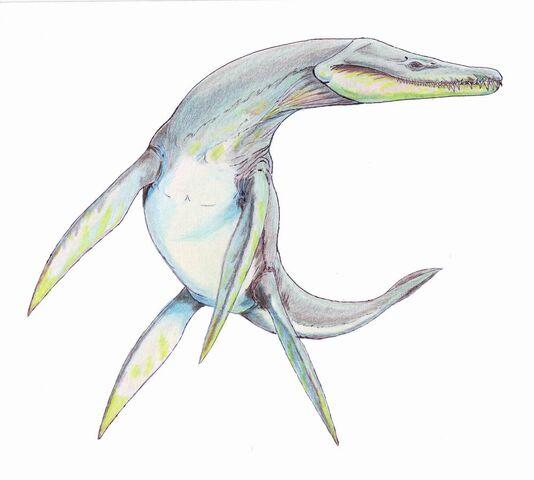 File:RhomaelosaurusDBjpg.jpg