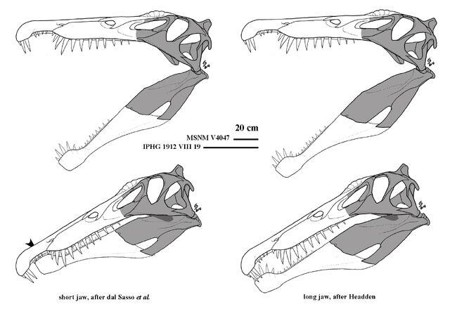 File:Spinosaurus - 2(Skull designs).jpg