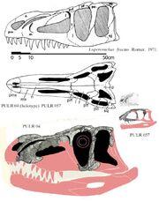 Luperosuchus -1(Skull)