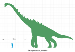 800px-Sauroposeidon-scale
