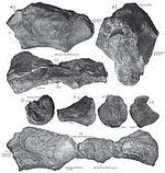 Camarillasaurus - 2