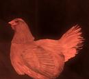 Chicken Trophy