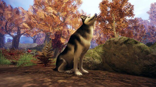 File:Husky Dog.jpg