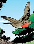 I8 Cock Robin