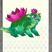 Nenufar dragon lv4-6