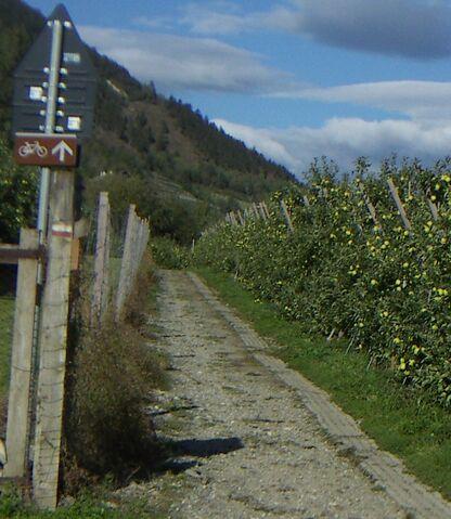 Datei:Radweg im vinschgau.jpg
