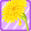 FFG Big Dandelion