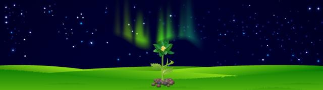 File:Bg auroragreen.png