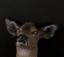 Carnivorous Deer