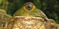 Hey-frog
