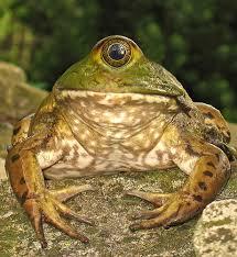 File:Mutantfrog.jpg