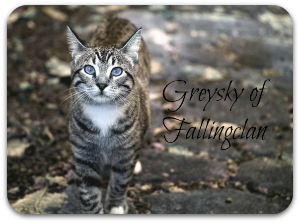 File:Greysky of Fallingclan.png