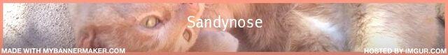 File:Sandynose.jpg