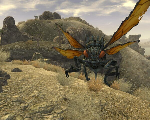 File:Cazador up close and personal.jpg