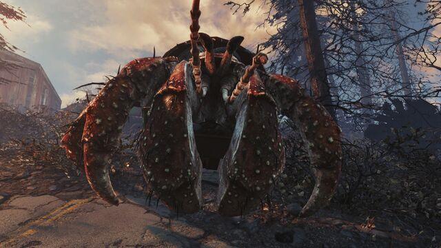 File:Alpha hermit crab.jpg