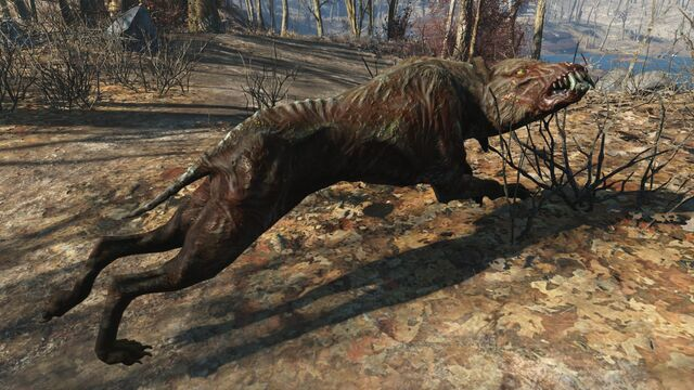 File:FO4 Alpha feral mongrel.jpg