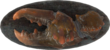 FO4-Mounted-Mirelurk-Claw