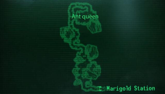 File:Queen ants hatchery loc.jpg