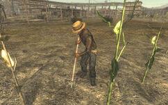 FNV sharecropper