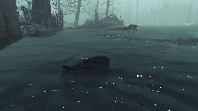 File:Fish Echo Lake Lumber.jpg
