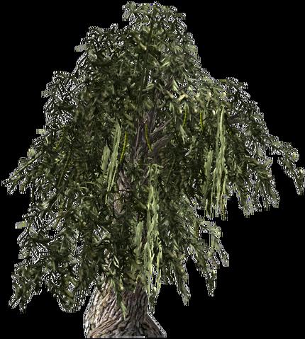 File:HoneyMesquite-plant.png