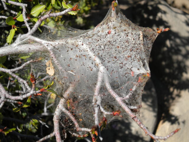 File:Spiderweb.jpg