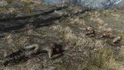Fo4 Three dead raiders