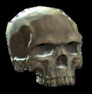 Upper skull