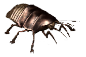 File:VB DD12 creat Cockroach.png